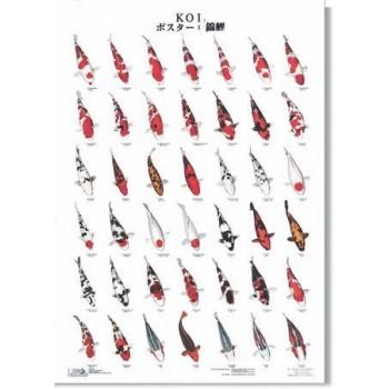 Koi Poster 70 x 100 cm
